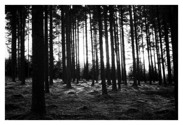 #hetbosingestuurd     Verdwalen in een sprookjesbos