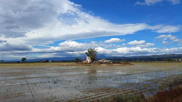 Rijstverbouw in de Ebro Delta
