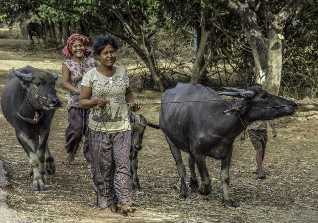 Karbouw