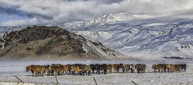De IJslanders
