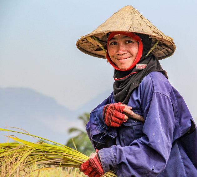 Meehelpen met de rijstoogst