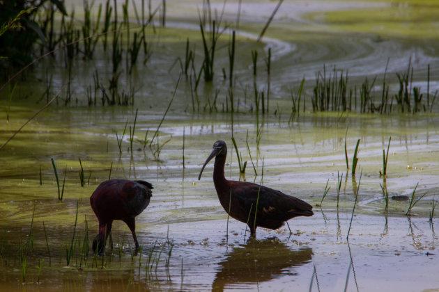 Nationaal park Doñana