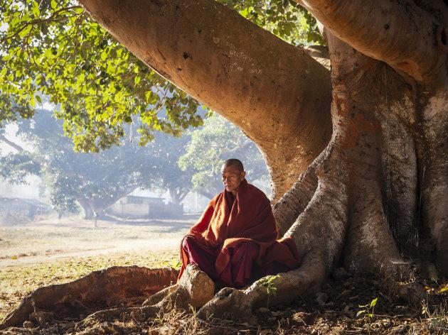 oude monnik onder een boom