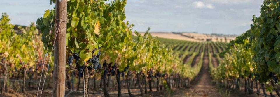 Wijnstreek, Portugal