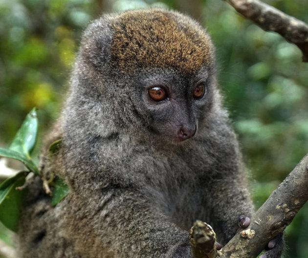 Op zoek naar lemuren