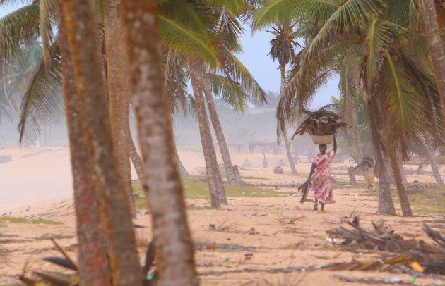 Brandhout uit het palmenbos