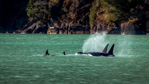 The Orca Family