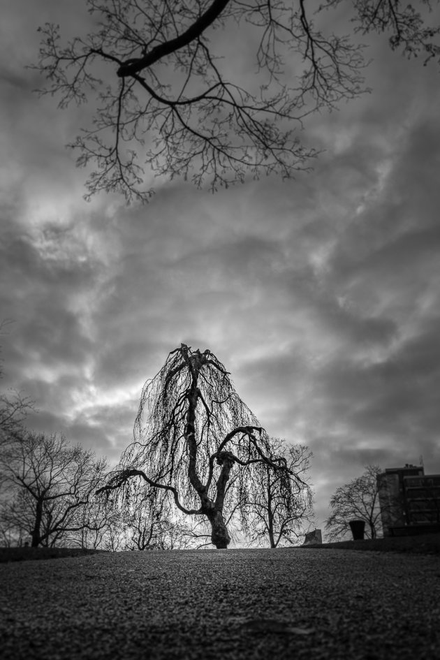 Drama in Kronenburgerpark