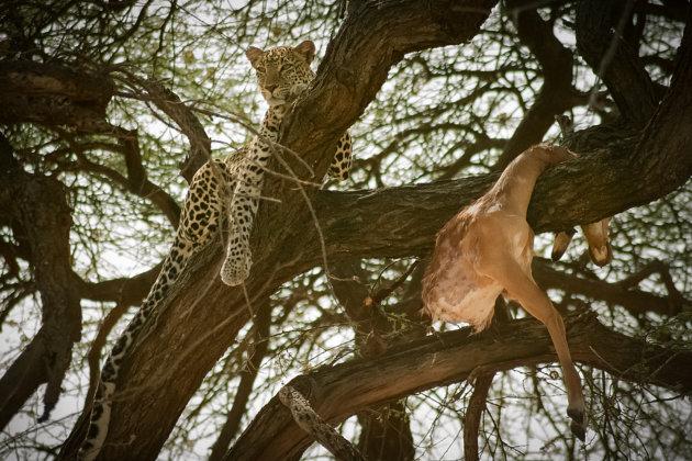 Kenia Samburu National Park