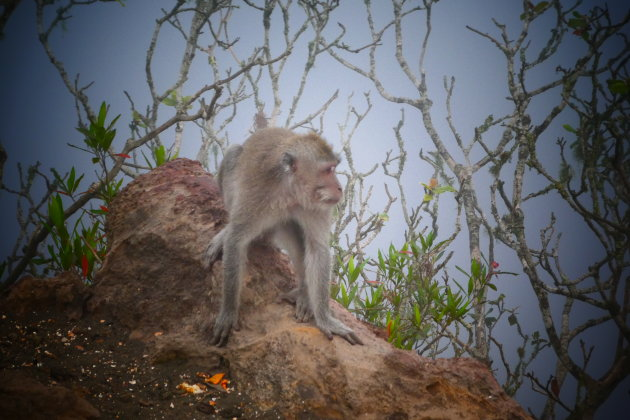Macaques in the mist