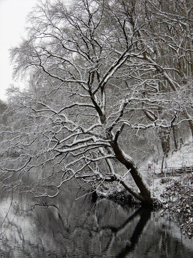 Black & White Frozen