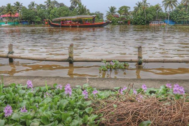 op de backwaters