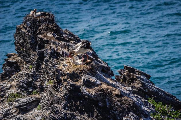 Samen op de rotsen