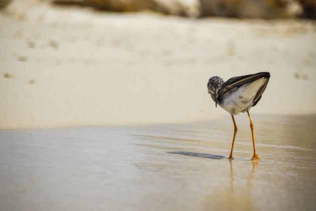 Wassend op het strand in Curaçao