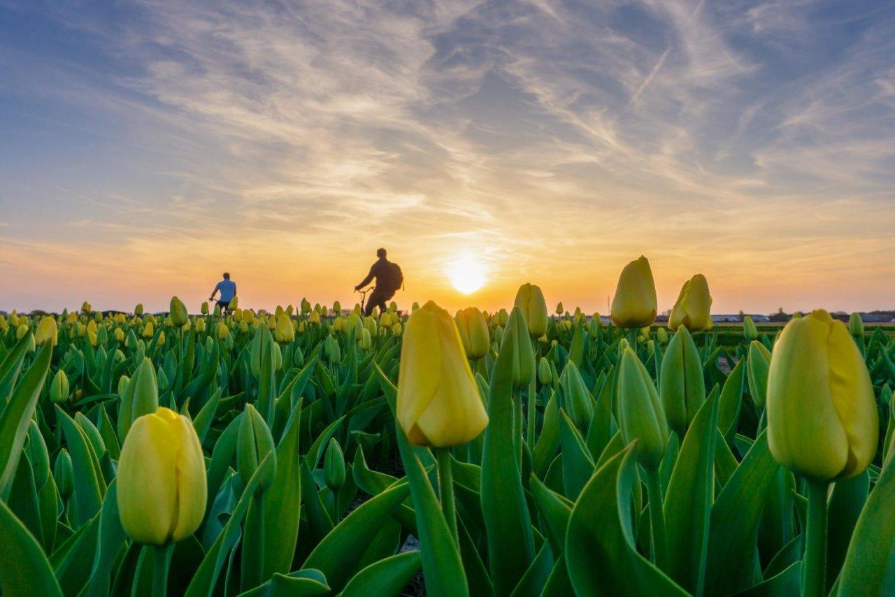 Voorjaar in de kop van Noord-Holland: 15 tips voor een dagje eropuit