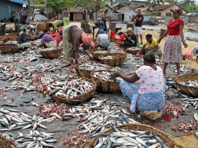 Vismarkt in Negombo