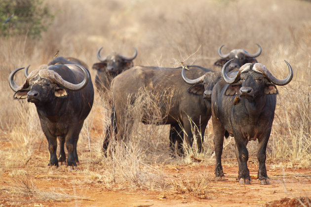 Kenia Tsavo National Park