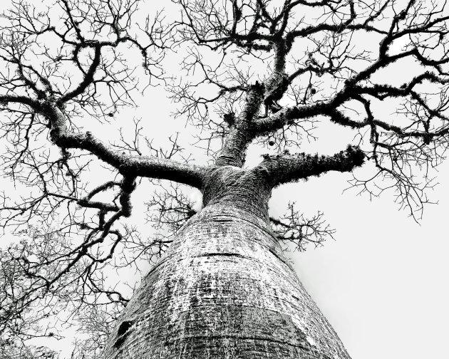 De ondersteboven boom