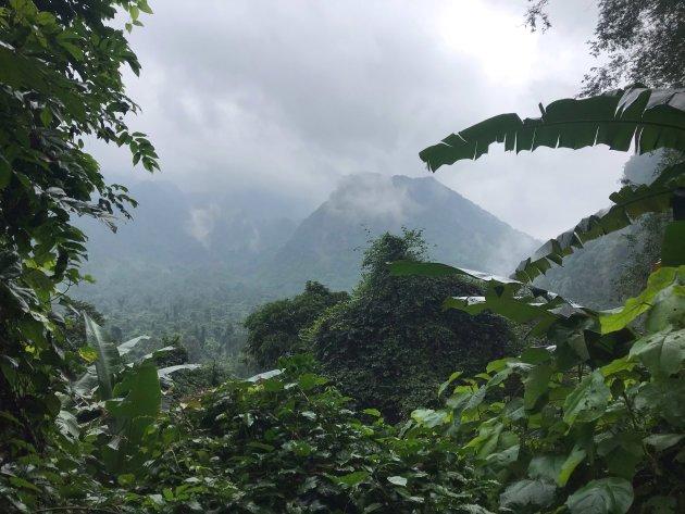 Mooi groen in Phong Nha