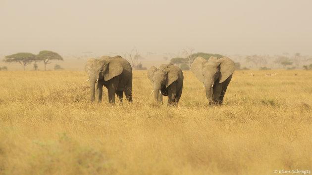 In Afrikaanse sferen