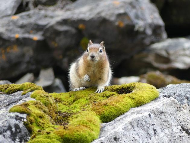 Lastig kiezen welk dier ik hier wil plaatsen van onze reis door West Canada... maar wie het kleine niet eert ;-)