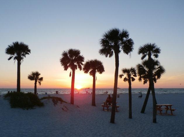 Wit strand en palmen in Clearwater, Florida