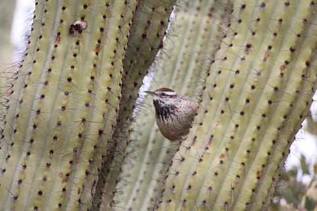 Saguaro NP Arizona