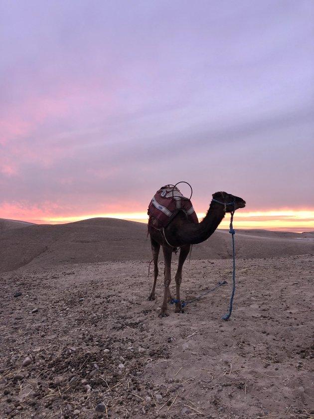 Agafay woestijn - onder de rook van Marrakech