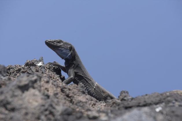 Ontmoet een bewoner van de Volcán de San Antonio