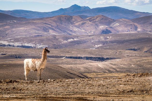 De lama en zijn omgeving