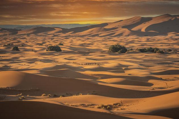De kleuren van de woestijn.