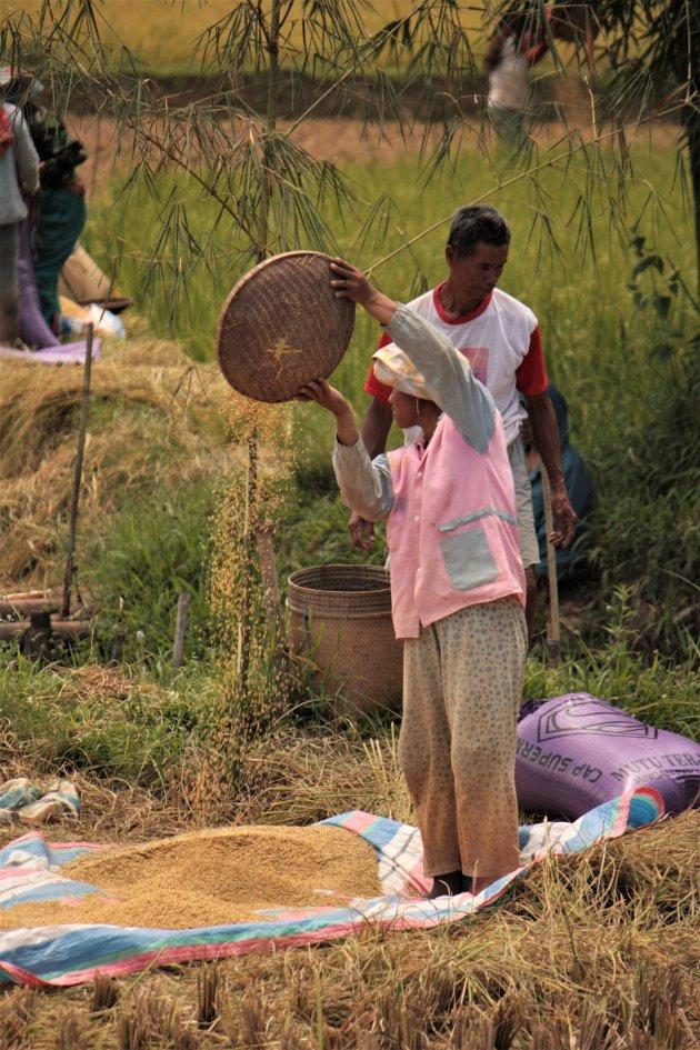 Kaf van de rijst scheiden