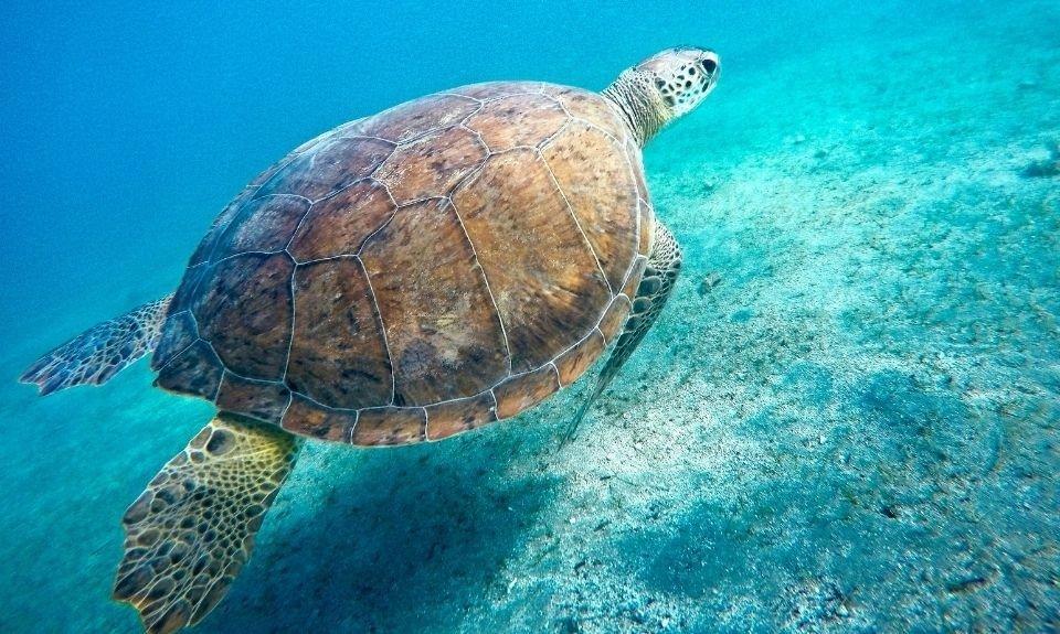 zeeschildpadden Noord-Cyprus