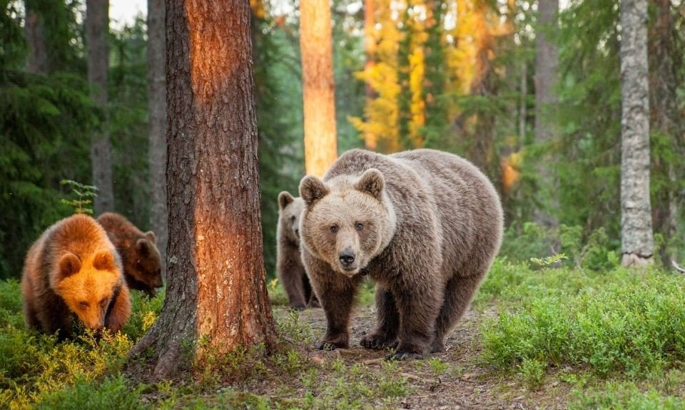 beren Martinselkonen Finland