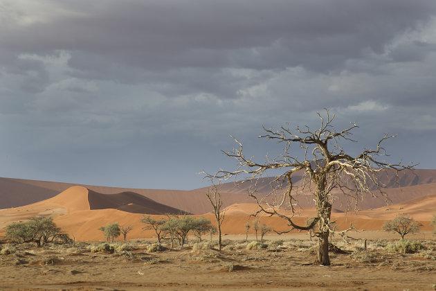 Namibië Namibwoestijn