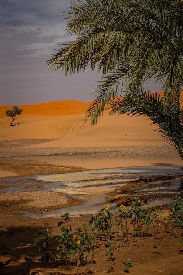 Zonnebloemen in de woestijn.