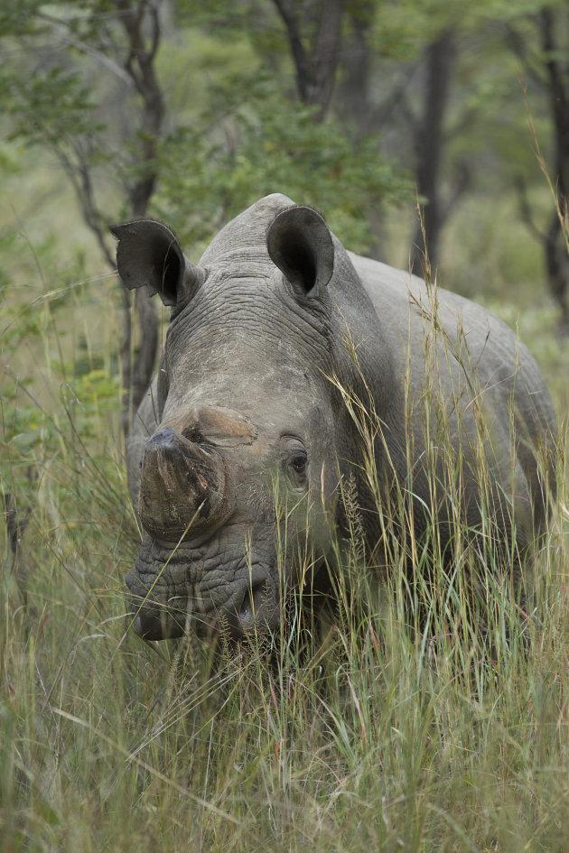 Zimbabwe Matobo National Park