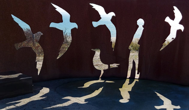 Vogels en zeehonden kijken op de Maasvlakte