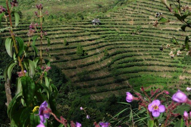 de rijst terrassen van Yunnan