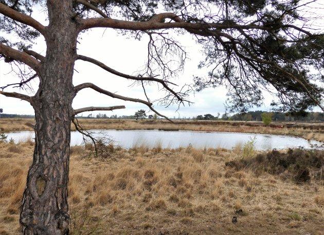 Grenspark Kalmthoutse Heide steeds boeiend