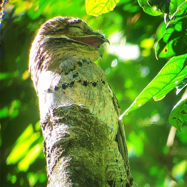 Bird spotting in Corcovado NP