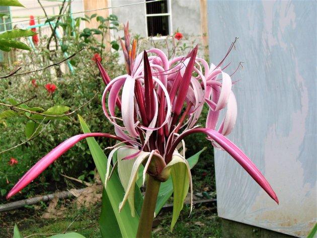 Prachtige bloem.