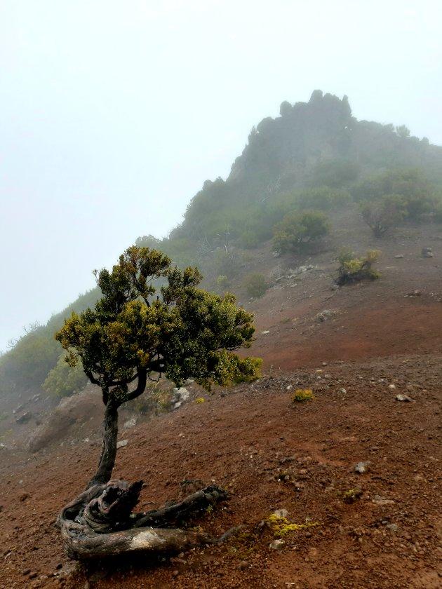 Pico in de mist
