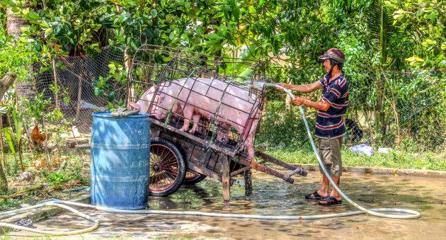 Het varkentje wassen