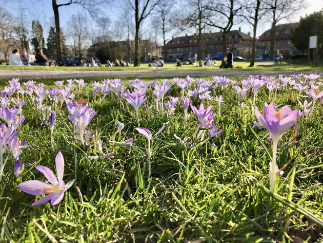 Lente in Utrecht