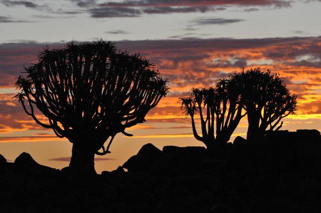 kokerboomwoud, Keetmanshoop, Namibië