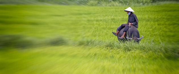 Boer op rijstveld
