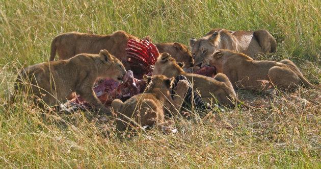 Familie diner , Masai Mara NP