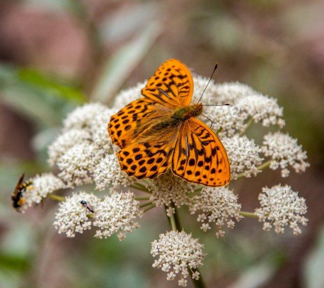 Ook het land van bloemen en vlinders