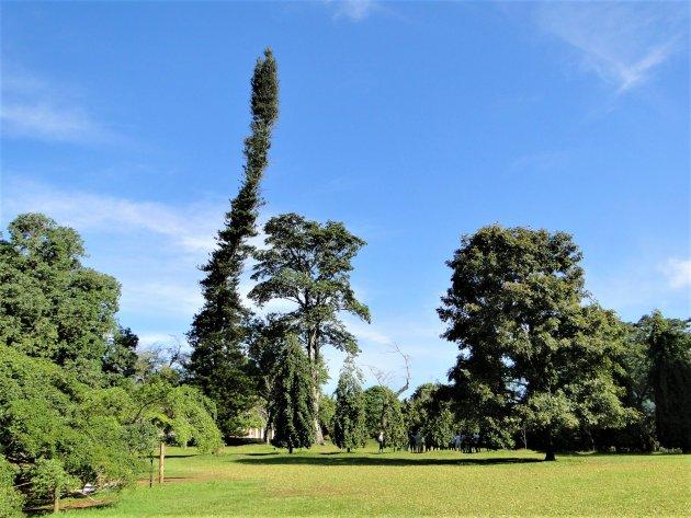 Botanische tuinen van Peradeniya.